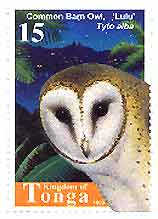 Tongan stamp featuring a barn owl